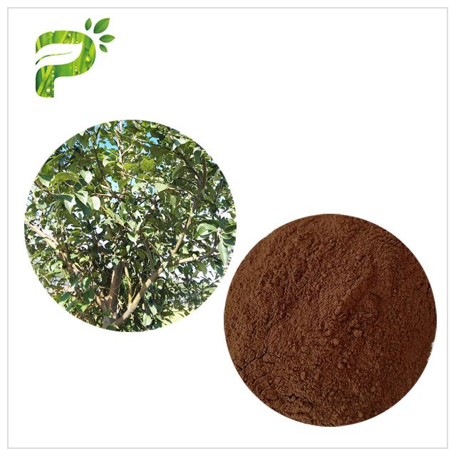 Apple Tree Bark&Root Extract