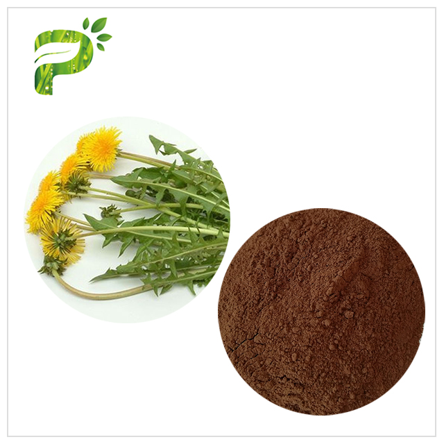 Dandelion Extract - Skin anti-inflammatory
