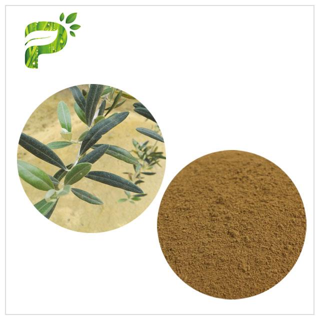 Olive Leaf Extract - Nourish Skin